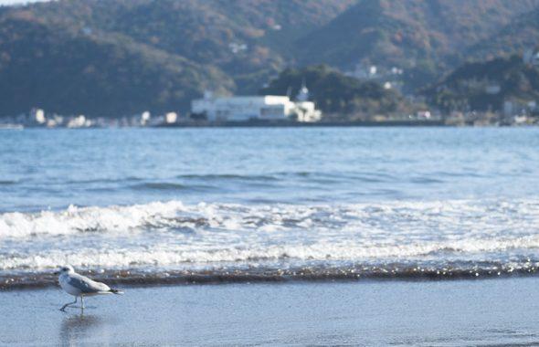 潮騒の宿ふじま:網代の海岸に佇む海鳥